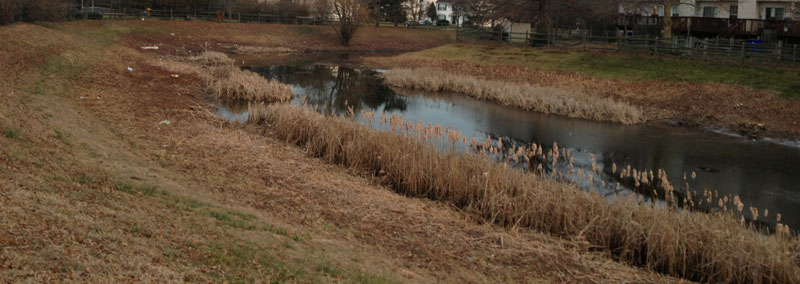 Storm Water Basin Clearing Newark Delaware
